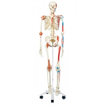 Squelette Sam